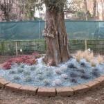 giardiniere Modena: giardinaggio, giardino, piante, fiori, Giardini Eden, Green Creations, piscine, laghetti, potatura, aiuole Formigine, aiuole Modena, progettazione, erba, siepe,