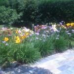 giardiniere Modena: giardinaggio, giardino, piante, fiori, Giardini Eden, Green Creations, piscine, laghetti, potatura, aiuole Modena, progettazione, erba, siepe,